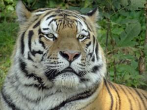 Angst vor Tiger, Affe, Elefant und Co.