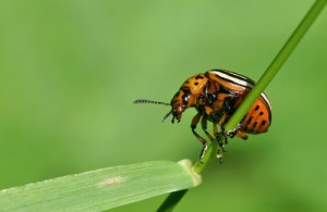 Entomophobie: Angst vor allem was krabbelt und fliegt...