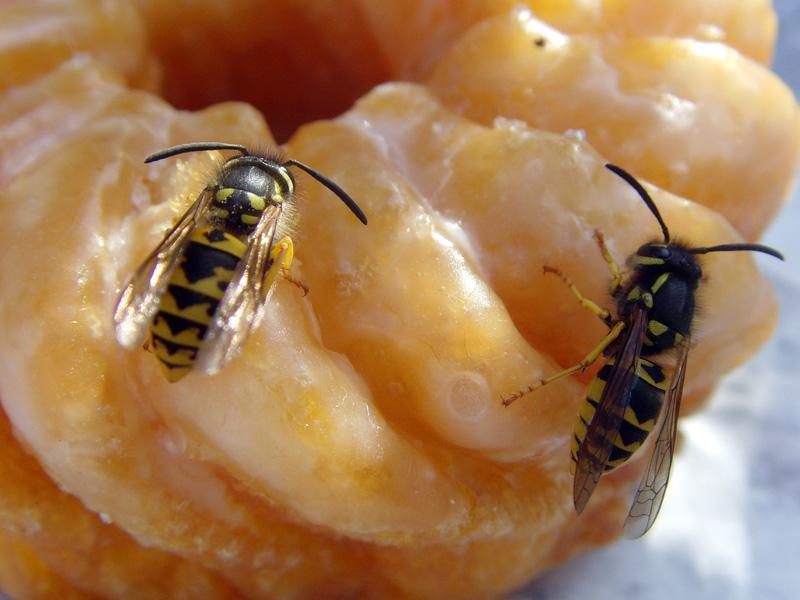 Was tun bei einem Wespenstich?