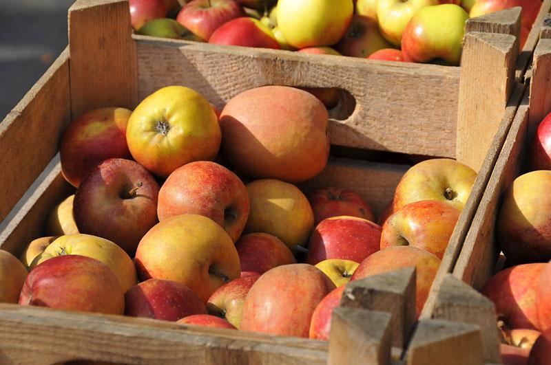 1 x am Tag einen Apfel essen hält gesund und macht schön