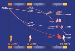 Infografik Abnahme Antioxidantien mit zunehmendem Alter
