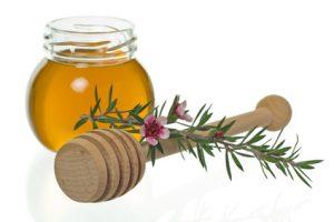 Honig von der Manuka Pflanze (Leptospermum) - apotheken-wissen.de
