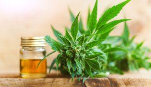 CBD Öl aus Cannabis - apotheken-wissen.de
