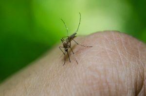 Mückenstich
